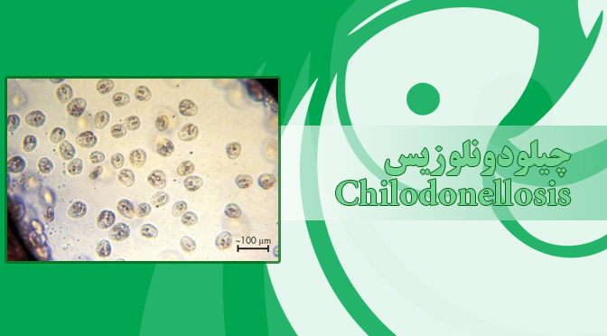 چیلودونلوزیس – Chilodonellosis